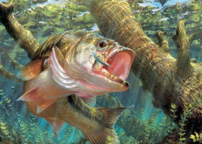 Fishing-Guide-Service-LaCoosa-Marina-6